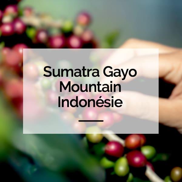 Sumatra Gayo Mountain Indonésie